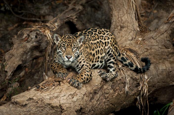 North Pantanal 2021