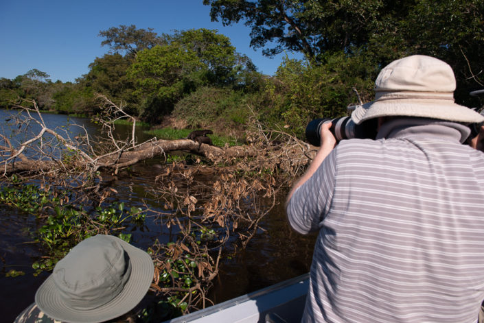 Photographing Giant Otters