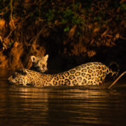 Complete Pantanal - September  07 to 19, 2022